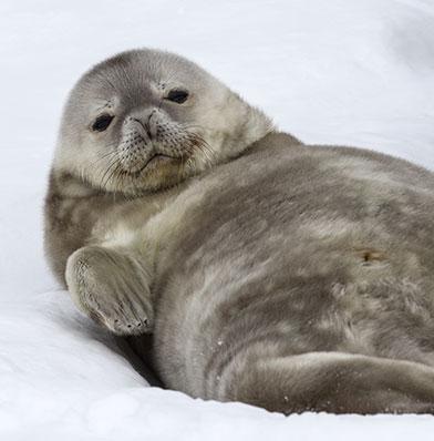 Save on Antarctic Adventures